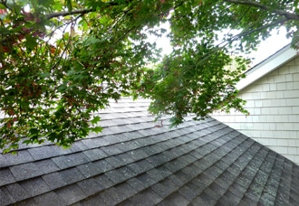 330x228_trees-over-roof